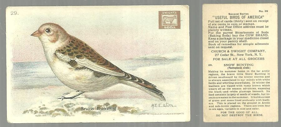 VICTORIAN TRADE CARD FOR CHURCH AND DWIGHT COW BRAND BAKING SODA, USEFUL BIRDS OF AMERICA SERIES, THE SNOW BUNTING, Advertisement