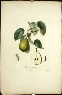 "Bezi de Montigny.   (Color stipple engraving from ""Traite des Arbres Fruitiers"")."