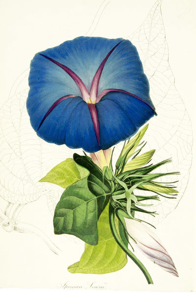 PAXTON'S MAGAZINE OF BOTANY AND...