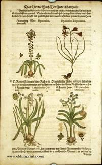 Hyacinthus. Hyacinthus Tripolitanus. I. Hyacinthus Orientalis. II. Hyacinthus Orientalis