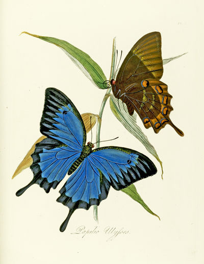 Natural History of the Insects of...