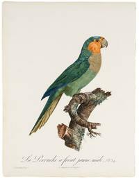[Blue-Fronted Amazon] La Perruche à front jaune, mâle