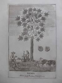 Papaya Arbor, ejusq; Fructus Nobilissimis