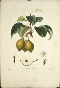 """Poire d'oeuf.  (Color stipple engraving from """"Traite des Arbres Fruitiers"""")."""