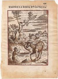L'asino, la simia, et la talpa (Der Esel, der Affe und der Maulwurf). Altkolorierter Holzschnitt 1570