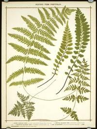 1. Marsh Buckler Fern... 2. Brittle Bladder Fern... 3. Mountain Bladder Fern... 4. Sea Spleenwort... 5. Sea Spleetwort