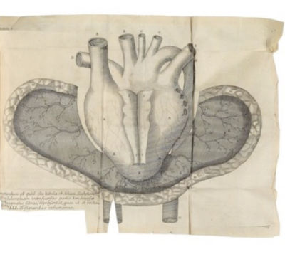 THE ANATOMY OF THE HEART AND THE...