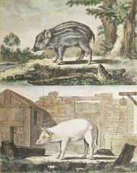 image of Le Marcassin [and] Le Cochon de Lait [1 handcolored copperplate engraving of a wild boar and a domesticated pig from Buffon's Histoire Naturelle]