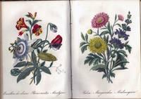 Diccionario Da Linguagem Das Flores; Ornato Com Estampas Coloridas