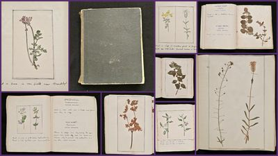 England, c1900. A charming herbarium journal that can be read in two different directions. If you op...