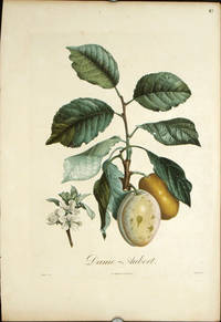 "Dame - Aubert.   (Color stipple engraving from ""Traite des Arbres Fruitiers"")."