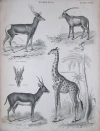 The Natural History of the Quadrupeds and Whales;