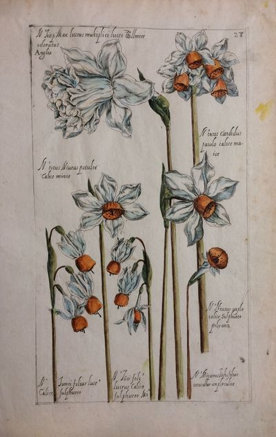 Paris: Pierre Vallet, 1608. unbound. very good(+). Engraving with hand coloring. Image measures 11.5...