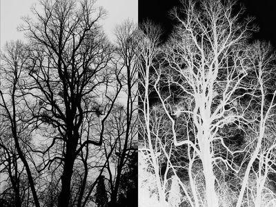 Darklight [Deluxe Edition]