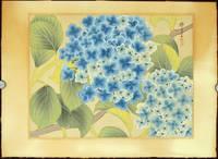 Untitled: Japanese woodcut of blue and white hydrangea