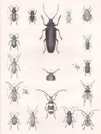 image of Original 1860 Engraved Plate of Beetles from Reports of Explorations