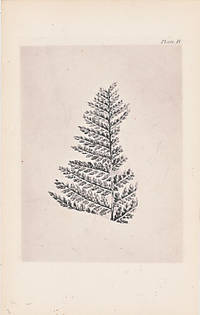 image of [Illustrations of Fossil Plants. Being an Autotype Reproduction of Selected Drawings]. Plates Only