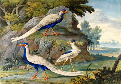 Two Silver Pheasants and a...