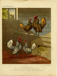Mr. Matthew Leno's Gold & Silver-Laced Bantams, First Prizes at Crystal Palace and Birmingham, 1871