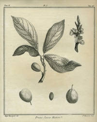 """Prune Jaune Hative, Plate I,  from """"Traite des Arbres Fruitiers"""""""