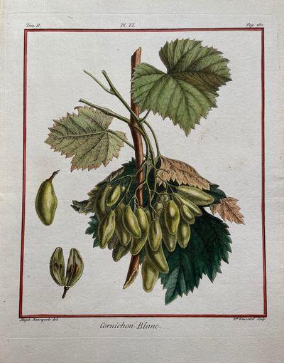 Paris, 1768. unbound. very good(-). Magdeleine Basseporte. Fruit botanical. Stipple engraving with h...
