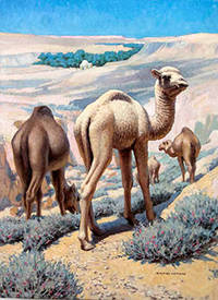 A Group of Camels by  Edward  (1900-1981) Osmond - Signed - from Alan Wofsy Fine Arts (SKU: 16-3140)
