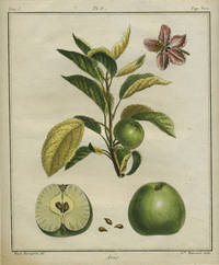 """Anis, Plate V,  from """"Traite des Arbres Fruitiers"""""""
