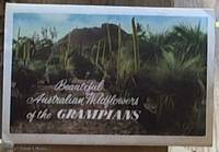 image of Beautiful Australian Wildflowers of the Grampians (Souvenir Folder)