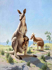 A Kangaroo Family by  Edward  (1900-1981) Osmond - Signed - from Alan Wofsy Fine Arts (SKU: 16-3148)