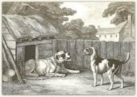 Mastiff and Hound