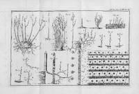 Des Semis et Plantations des Arbres, et de leur Culture; ou Méthodes pour multiplier et élever les Arbres, les planter en Massifs & en Avenues; former les Forêts & les Bois; les entretenir, & rétablir ceux qui sont dégradés: faisant partie du Traité complet des Bois & des Forêts