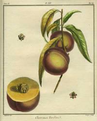 "Chevreuse Tardive, Plate XIV,  from ""Traite des Arbres Fruitiers"" by  Henri Louis Duhamel  Du Monceau - First edition - 1768 - from Antipodean Books, Maps & Prints and Biblio.com"