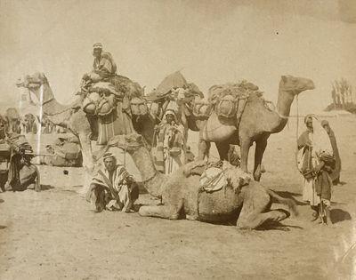 [Album of 146 photos of Egypt].