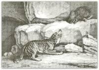 Wolf & Porcupine