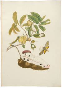 [Soursop with Owlet Moth]