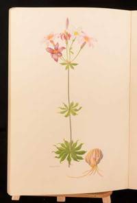 A Supplement to Elwes' Monograph of The Genus Lilium
