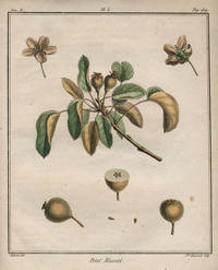 """Petit Muscat, Plate I,  from """"Traite des Arbres Fruitiers"""" by  Henri Louis Duhamel  Du Monceau - First edition - 1768 - from Antipodean Books, Maps & Prints and Biblio.com"""