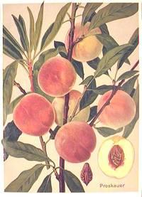 Proskauer. (Variety of peach)