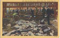 Deep Sea Net Haul, Million Dollar Pier, Atlantic City, NJ, 1946 used linen Postcard