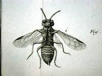 Histoire abregée des insectes qui se trouvent aux environs de Paris; Dans laquelle ces Animaux font rangés suivant un ordre méthodique, I-II. [TWO VOLUMES. FIRST EDITION IN ORIGINAL STATE].