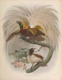 A Monograph of the Paradiseidae, or Birds of Paradise