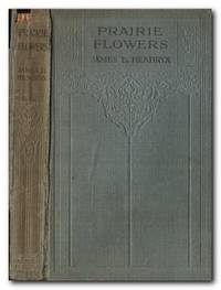 image of Prairie Flowers