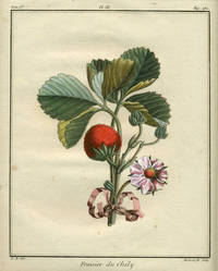"""Fraisier du Chily, Plate III,  from """"Traite des Arbres Fruitiers"""""""