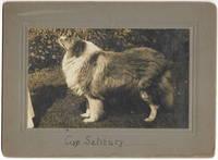 [Photograph, Dog]  Four Mounted Gelatin Silver Photos of Show Dog Gyp Salisbury