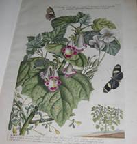Plantae et papiliones rariores depictae et aeri incisae.
