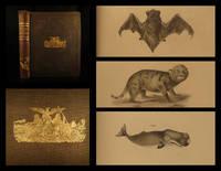 Natural history of New York: part 1, Zoology