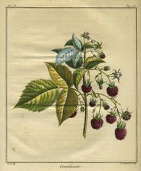 "Framboisier from ""Traite des Arbres Fruitiers"""