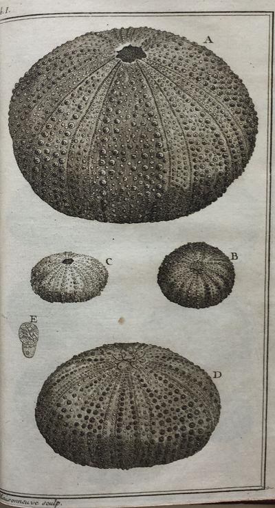 Ordre Naturel des Oursins de Mer et...