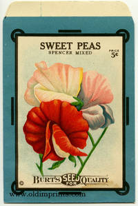 Sweet Peas - Spencer Mixed
