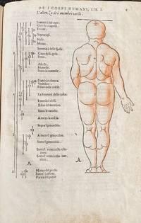 Di Alberto Durero pittore, e geometra chiarissimo. Della simmetria dei corpi humani. Libri...
